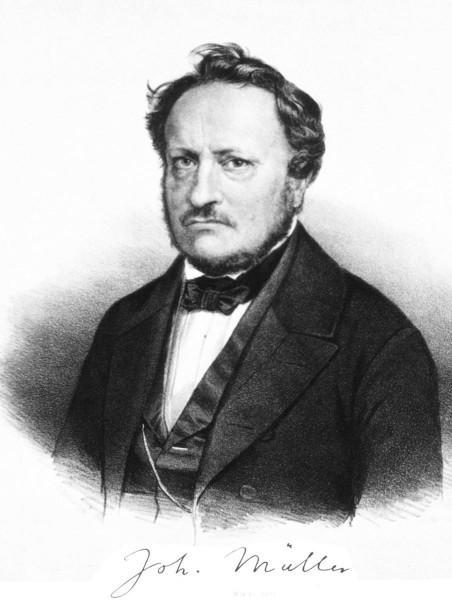 Johannes Muller